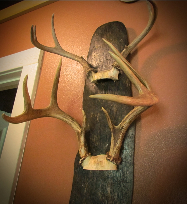 Deer Antlers on Drift Wood